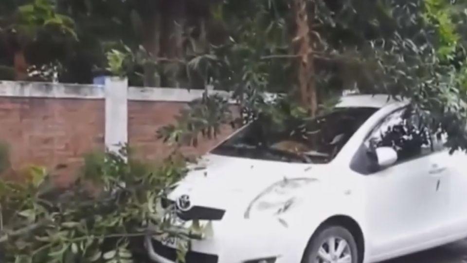 埔里怪風吹斷樹 轎車擋風玻璃被插破