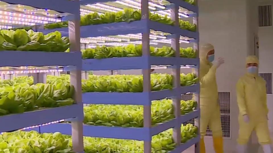 廈門首富「開心農場」 打造全球最大科技菜園