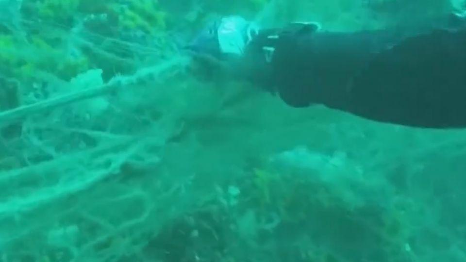 慟!流刺網毀生態 珊瑚礁、海底生物受衝擊