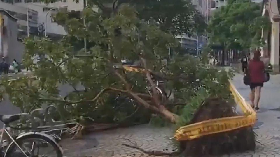 颱風夜北市颳14級強陣風! 多處路樹倒險象多