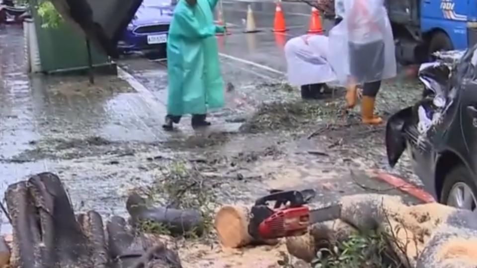 幼稚園旁路樹連根塌砸車 險壓傷懷孕老師