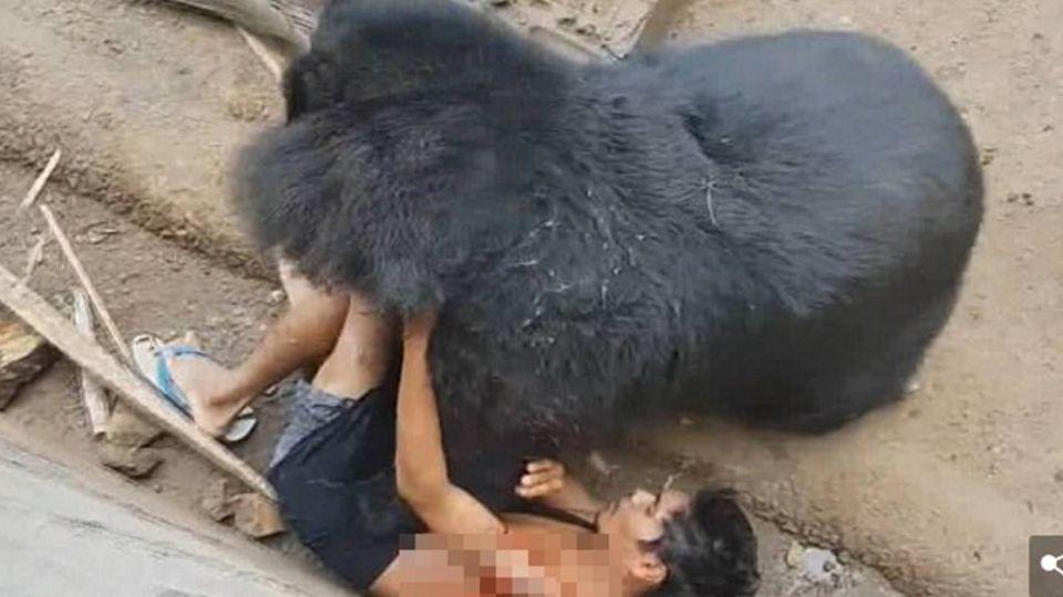 【影片】慎入!男伸手逗黑熊被拖進籠撕咬  送醫縫1000針