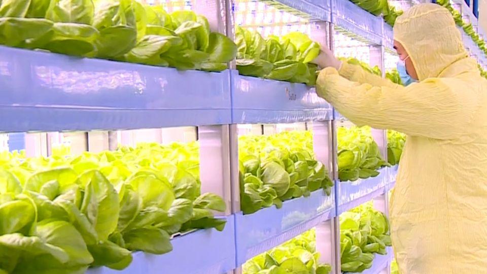 現代菜園顛覆傳統 彷彿置身科技廠