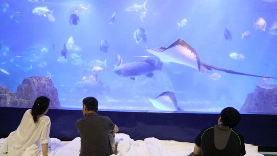 體驗與海生動物共度一晚 網友驚呼:太夢幻了!