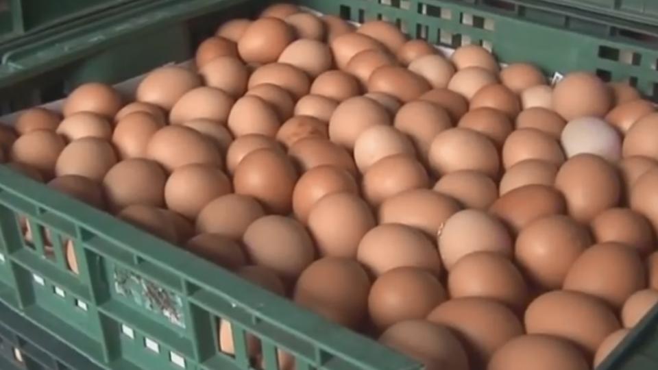 6萬顆毒蛋下落不明 鑫順祥喊冤只負責交換