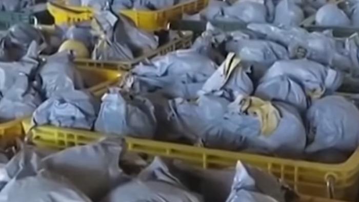 忙搶收水梨堆滿屋 泰利颱風竟不來了農民傻眼