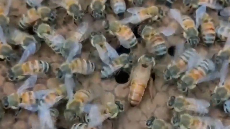 林邊市場天空奇景 數萬隻蜜蜂盤踞如龍捲風
