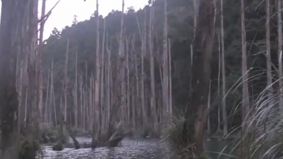 「水漾森林」樹倒壓帳篷3傷 違法紮營還要罰
