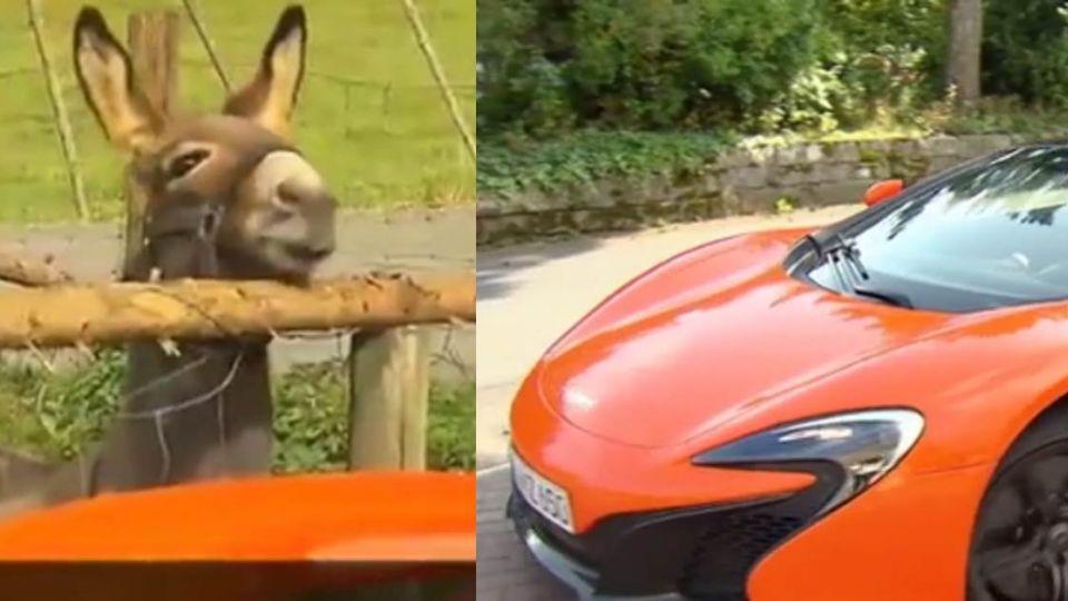 餓昏了?呆驢把跑車當蘿蔔啃 結果主人賠慘了