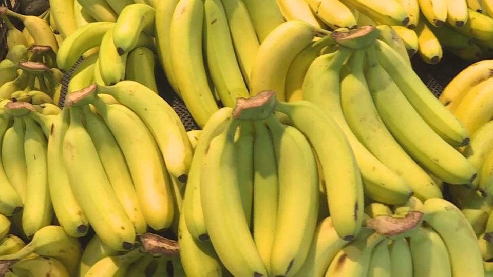 香蕉每公斤百元跌至十元 蕉農欲哭無淚