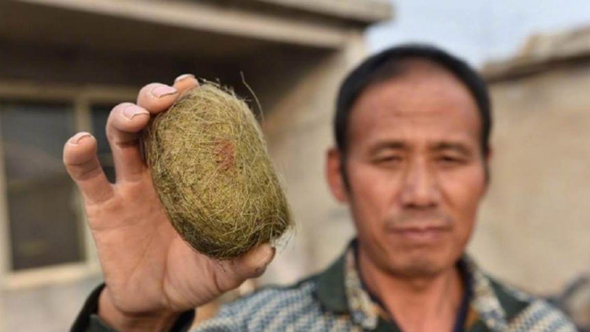 農民殺豬驚得巨大「豬寶」 鑑定後…價值高達1800萬!