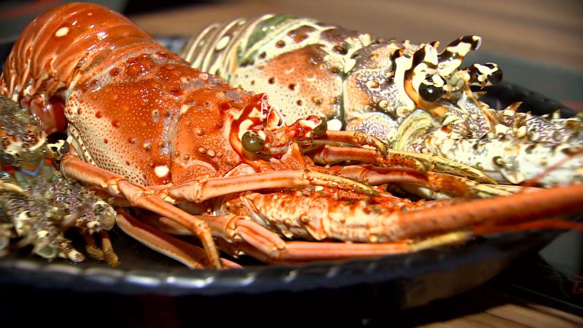 吃到飽拚吸睛推龍蝦 品種、生凍、熟凍有價差