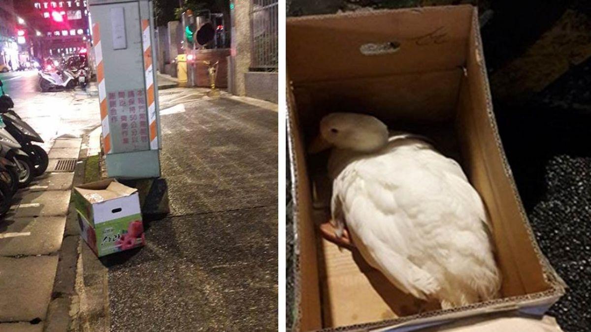 路上撿到淋雨白鴨…竟是法會「帶路鴨」!禮儀師驚:有煞氣