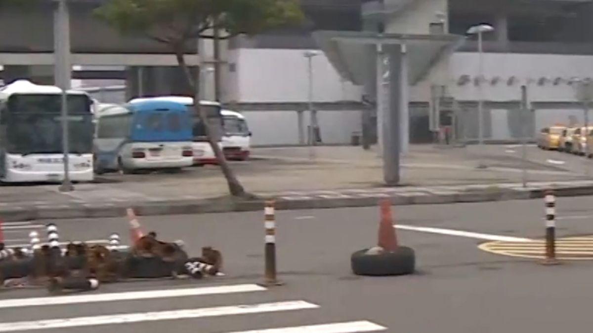 擋車還是擋人?斑馬線設路障防車迴轉 苦了行人