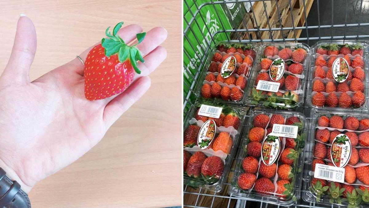 超飽滿大草莓上架!網衝好市多搶買…一開店就被掃空