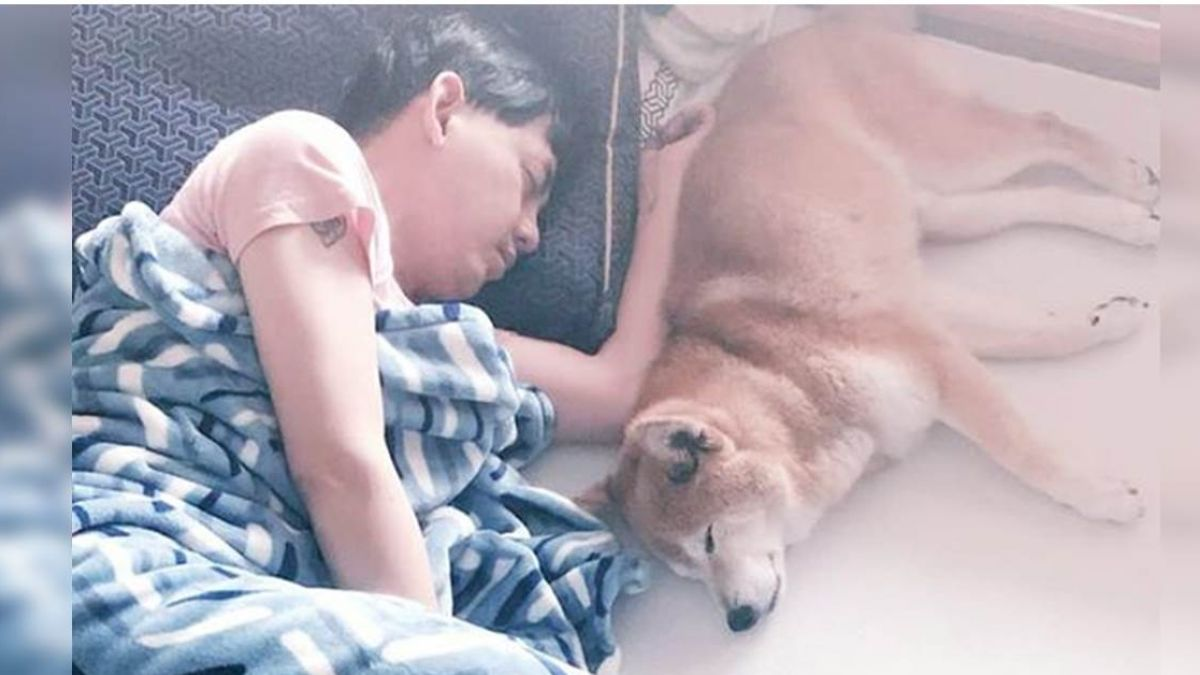 17歲愛犬失智半夜驚醒 黃子佼好心疼…陪睡地板2年