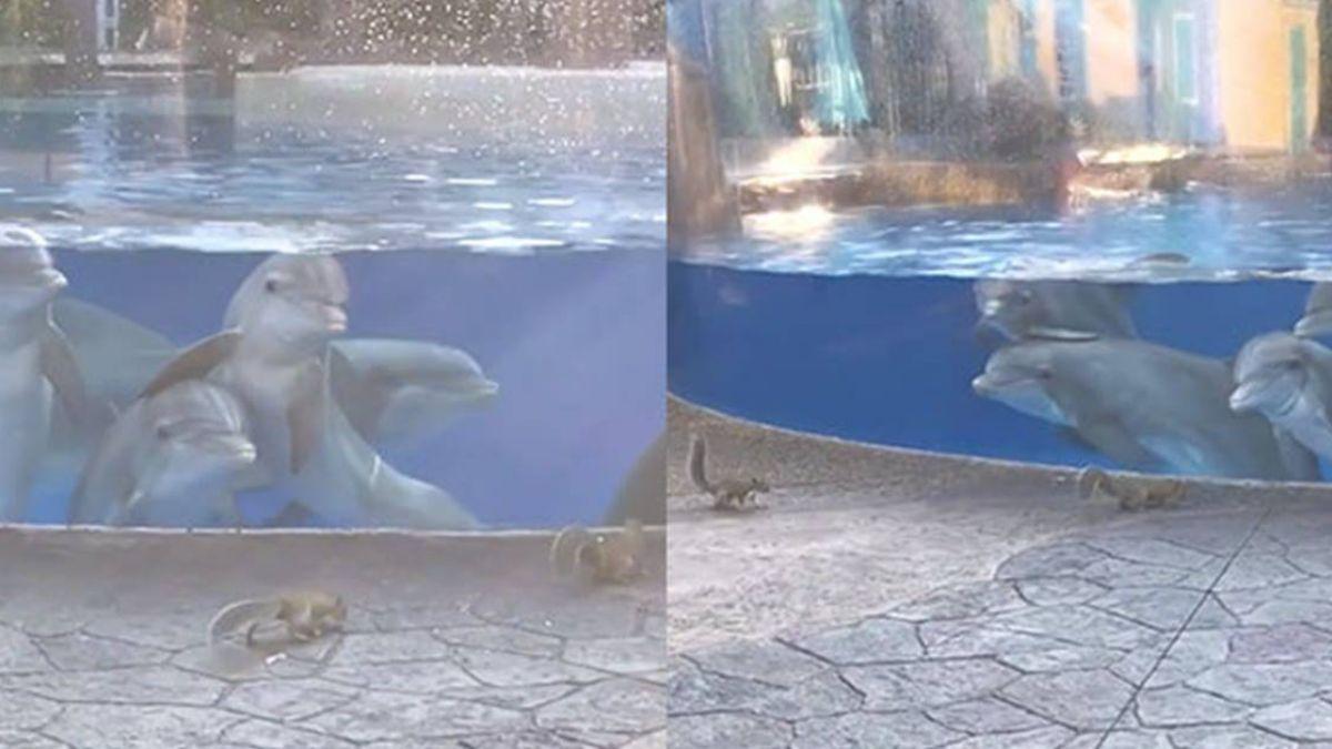 松鼠經過…4海豚揪團觀察猛瞧!網不捨罵翻:快放了牠們