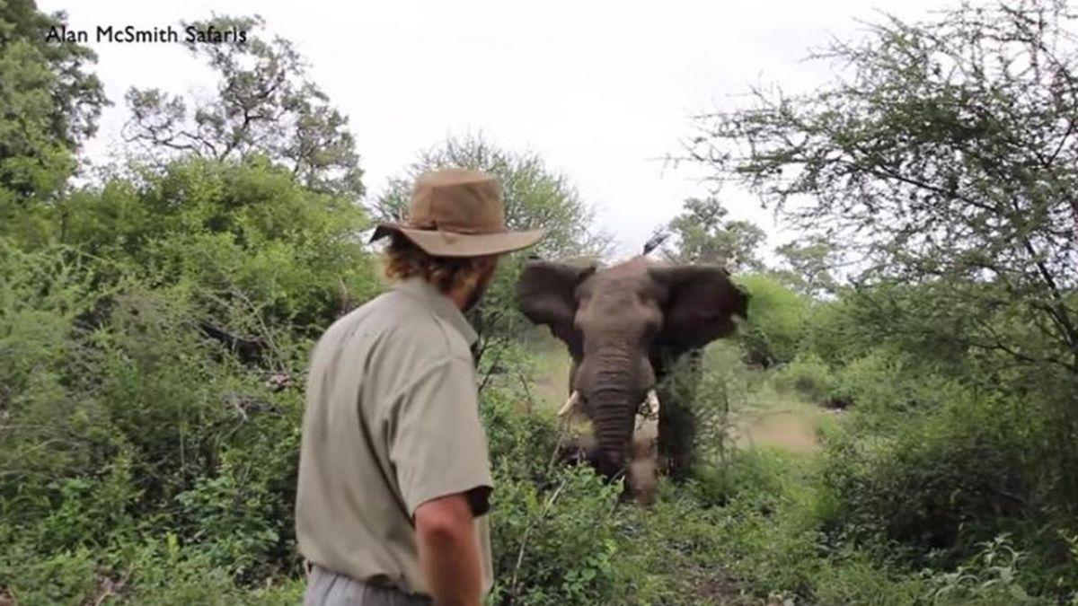 【影片】驚險120秒!野生大象2度暴衝攻擊 他用奇招全身而退