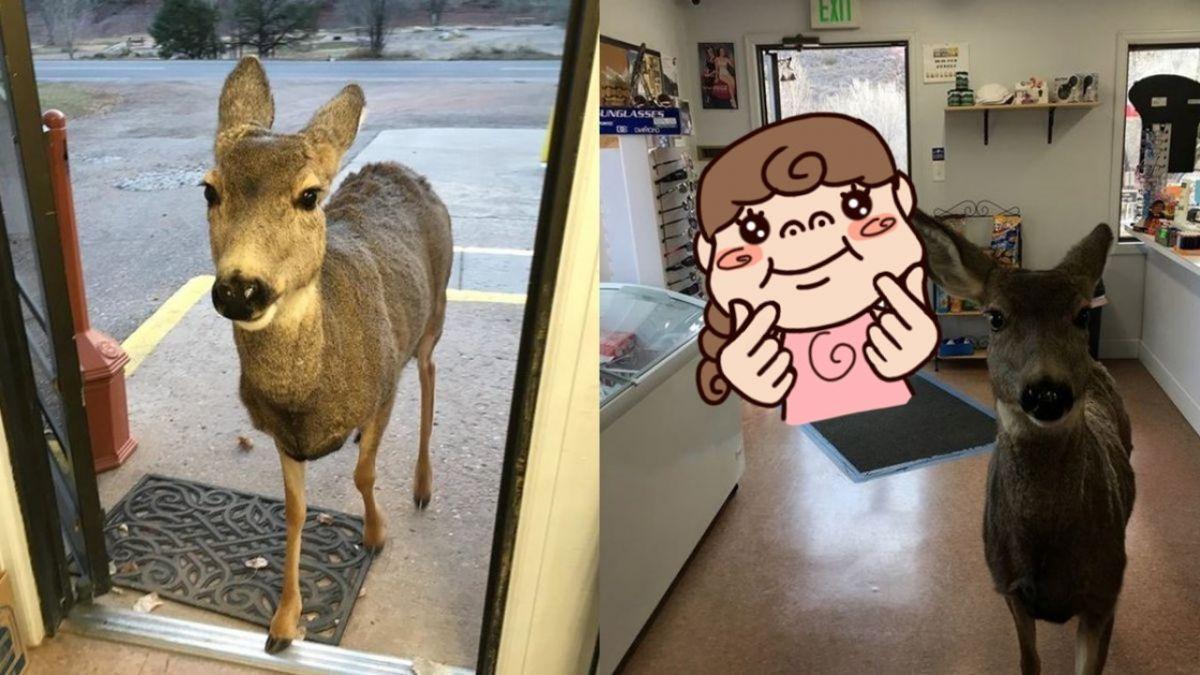 萌翻!母鹿闖商店被請出 30分鐘後…竟全家出現在門外