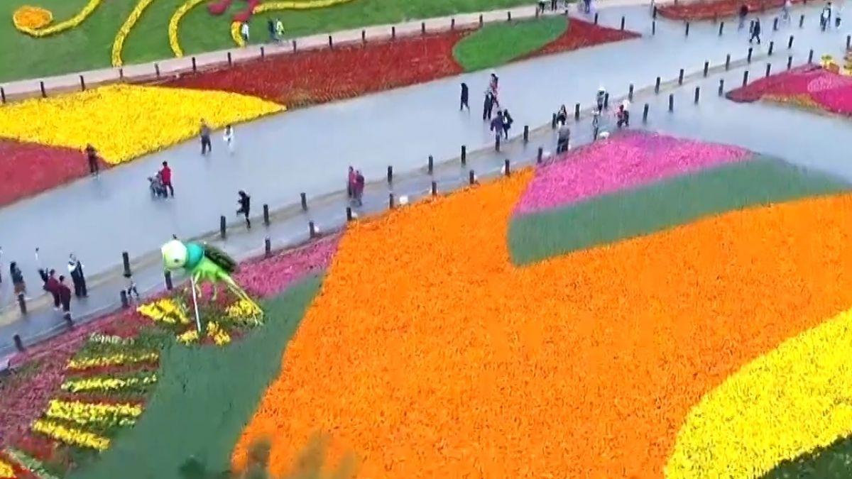 花毯節3天連假湧50萬人 周邊塞車龜速