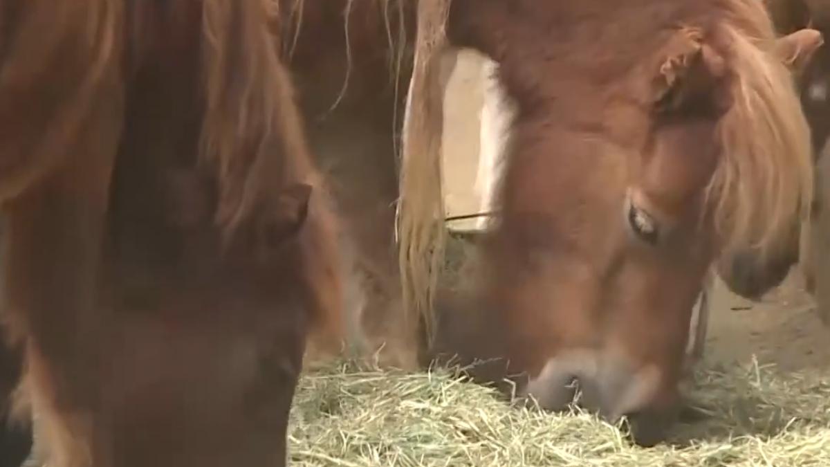 一歲男童餵馬遭咬傷 母心有餘悸:不敢來了