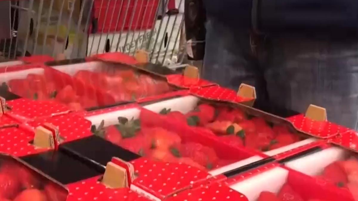 限量大湖草莓吸客 美式賣場又現搶購潮