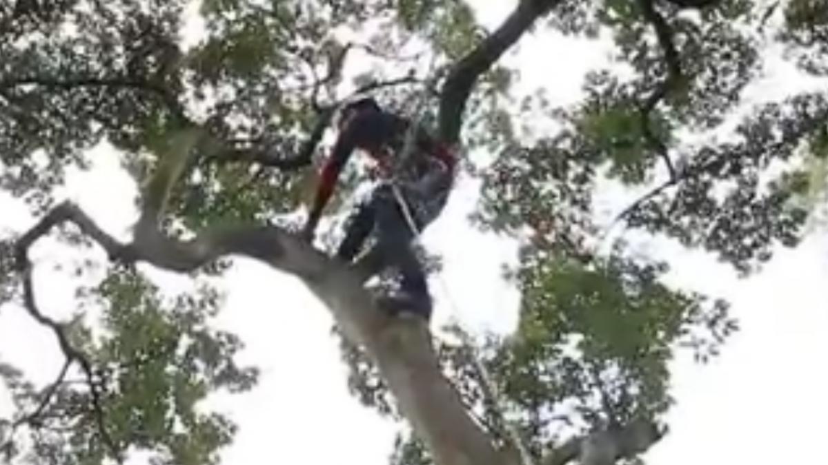 全台僅10人 攀樹師就像蜘蛛人月賺6位數