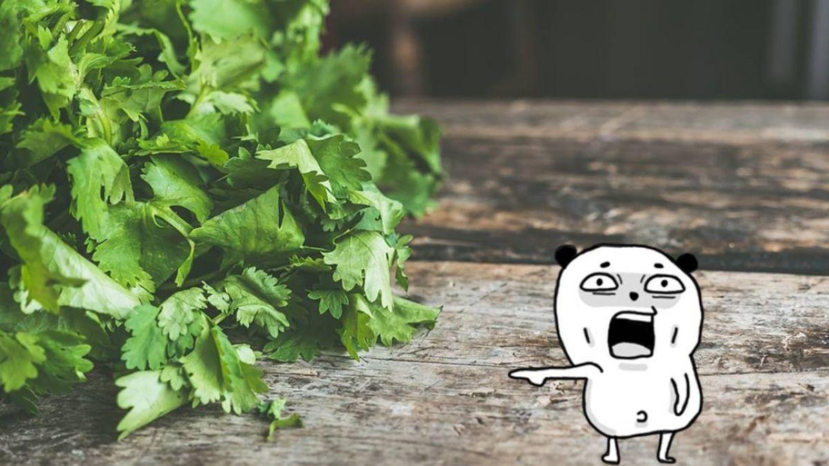 不是故意的!討厭香菜原因曝光 竟然基因有關