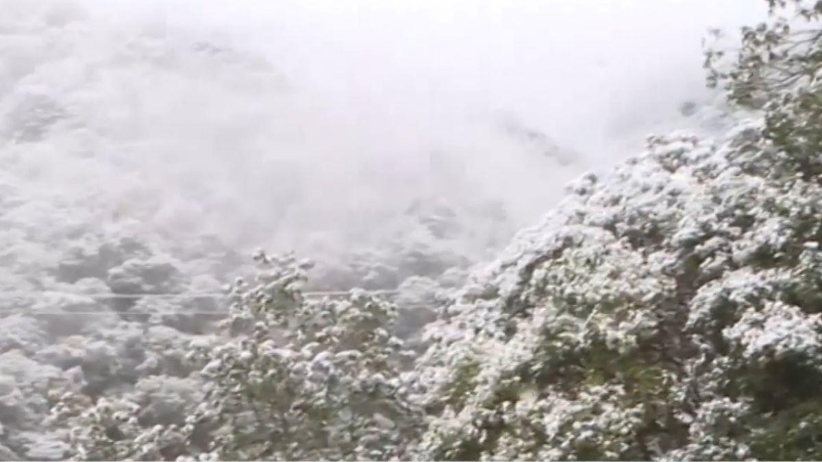 銀白仙境! 太平山積雪8公分 拉拉山神木白頭