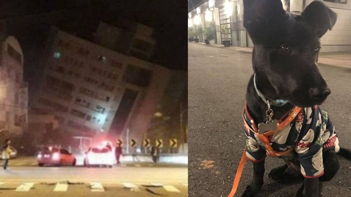 小黑狗猛吠!地震前衝馬路抓地…他驚呼「牠救了我一命」