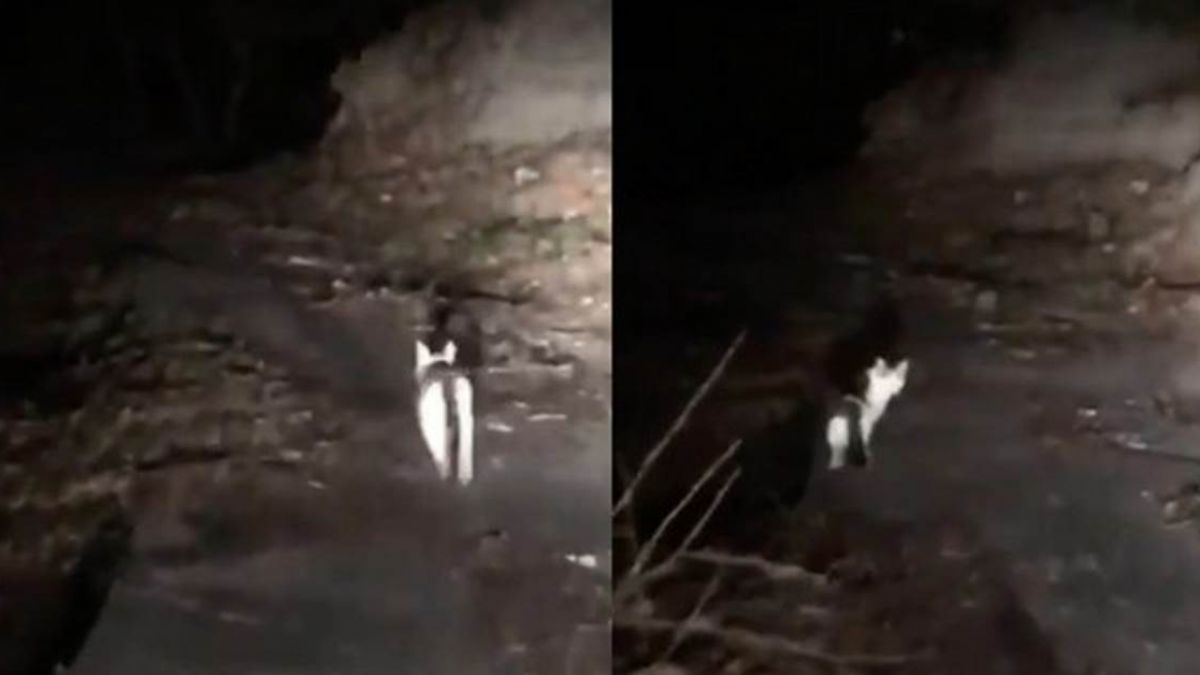 【影片】神奇!神祕灰白貓化身「山神」?深山中帶迷途駕駛脫困