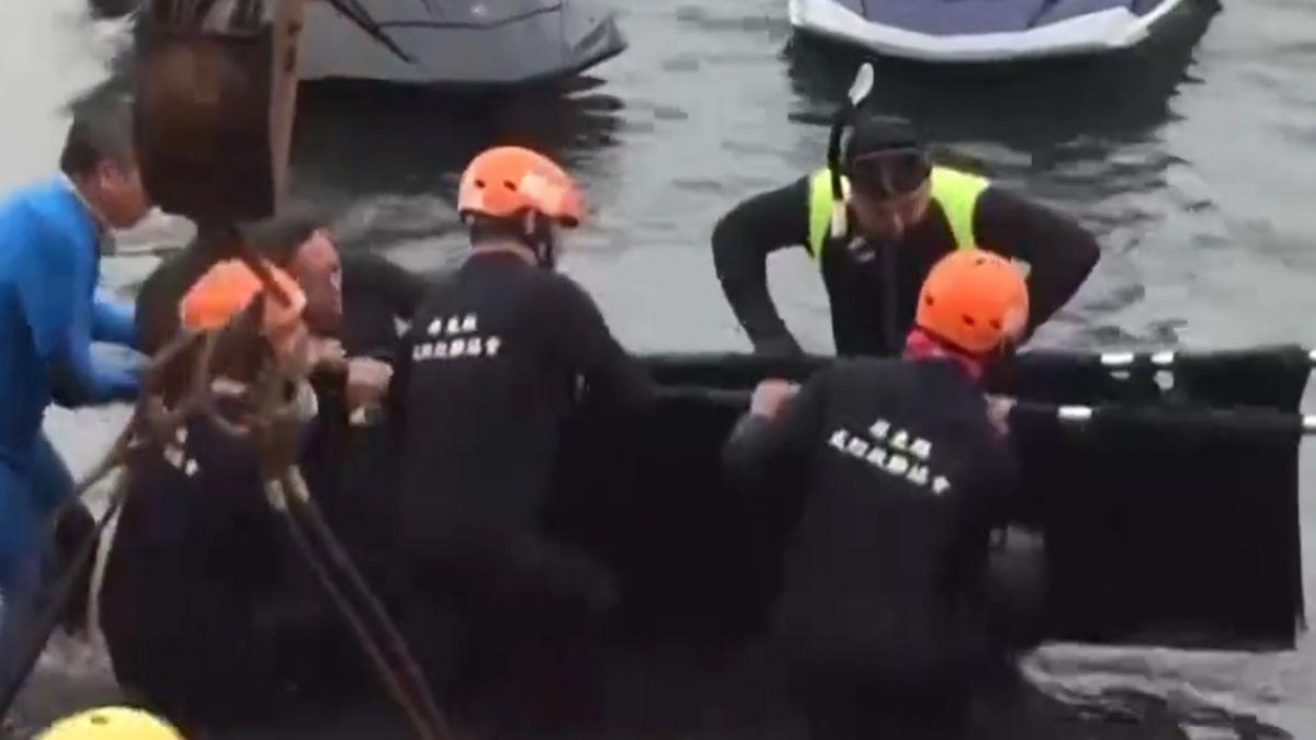 搶救迷航小虎鯨大作戰 3隻送往成大