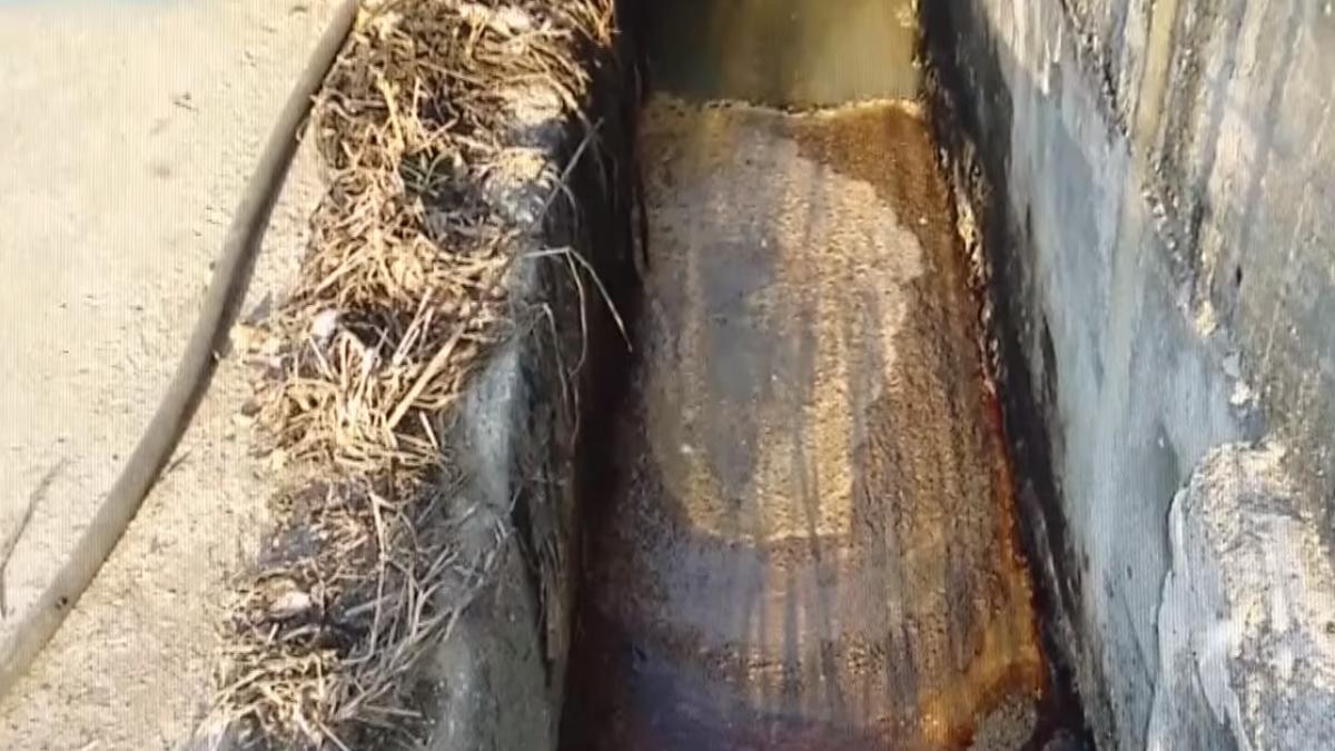 屏東老農揭餿水油 揭弊後生命受威脅