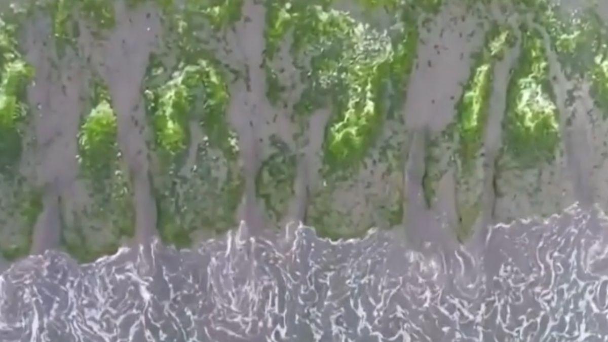 台南後花園漁光島 成春季限定版抹茶髒髒包
