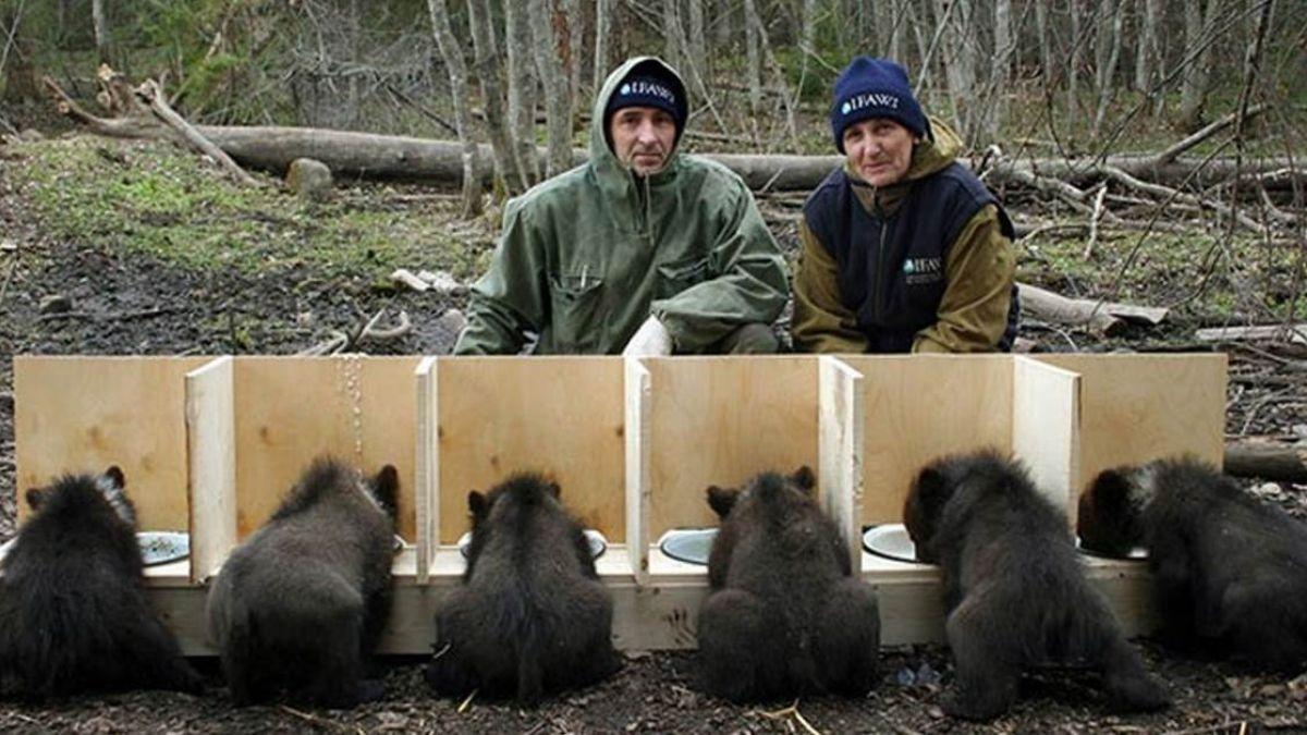 與時間賽跑!「極凍森林」上演血腥屠殺 零下30度搶救棕熊孤兒