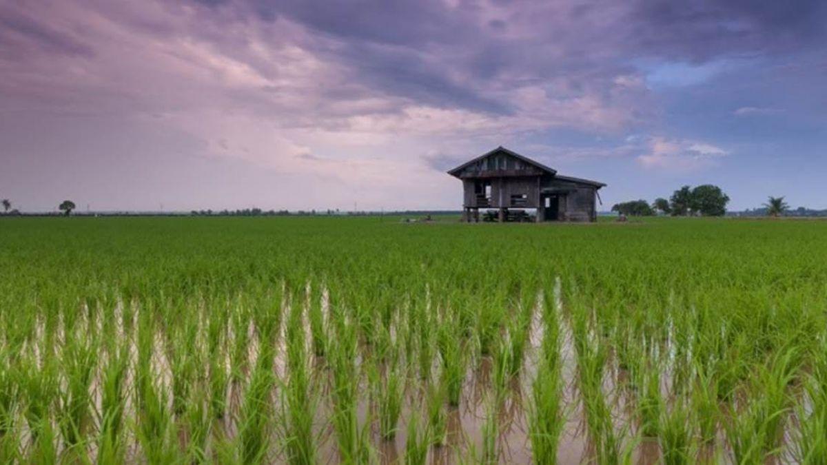 台灣「住鄉下」該如何定義? 網友大推五大特點
