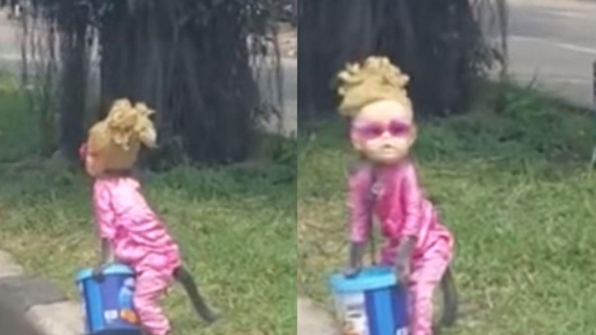 【影片】鐵鍊拴脖子!「金髮小女孩」路邊乞討 真相曝光拳頭都硬了