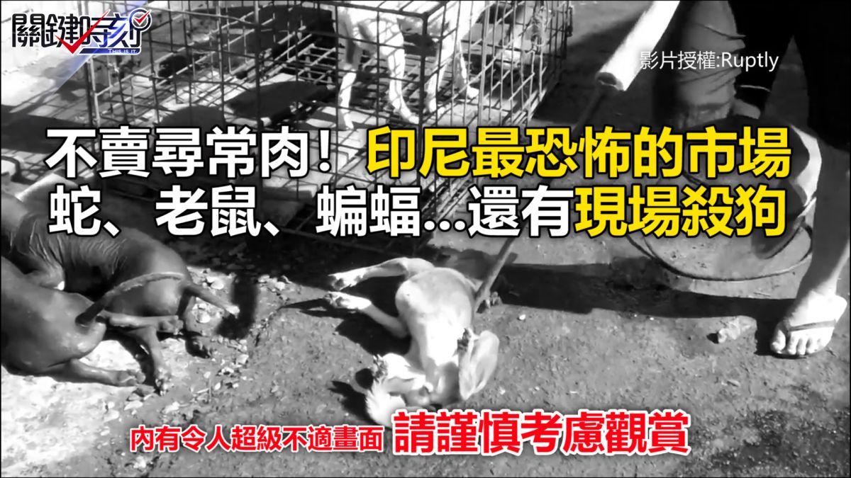 不賣尋常肉!印尼最恐怖的市場 蛇、老鼠、蝙蝠...還有現場殺狗