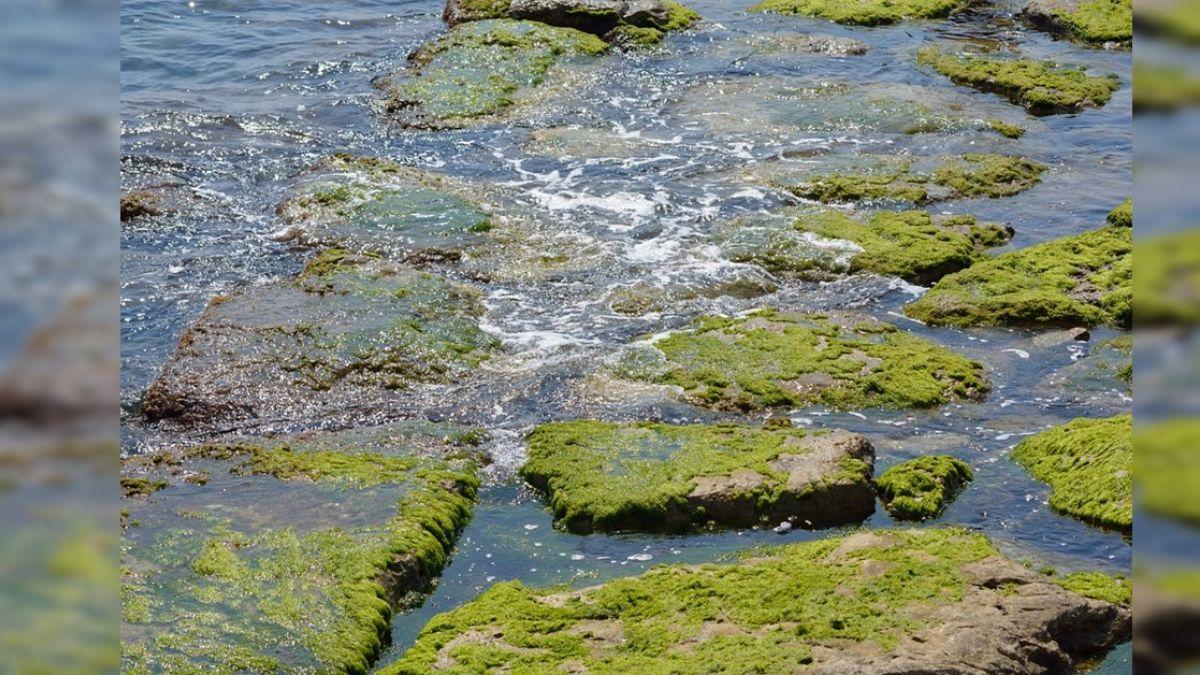2050年糧食危機爆發?「藻類」蛋白質豐富 農作新趨勢