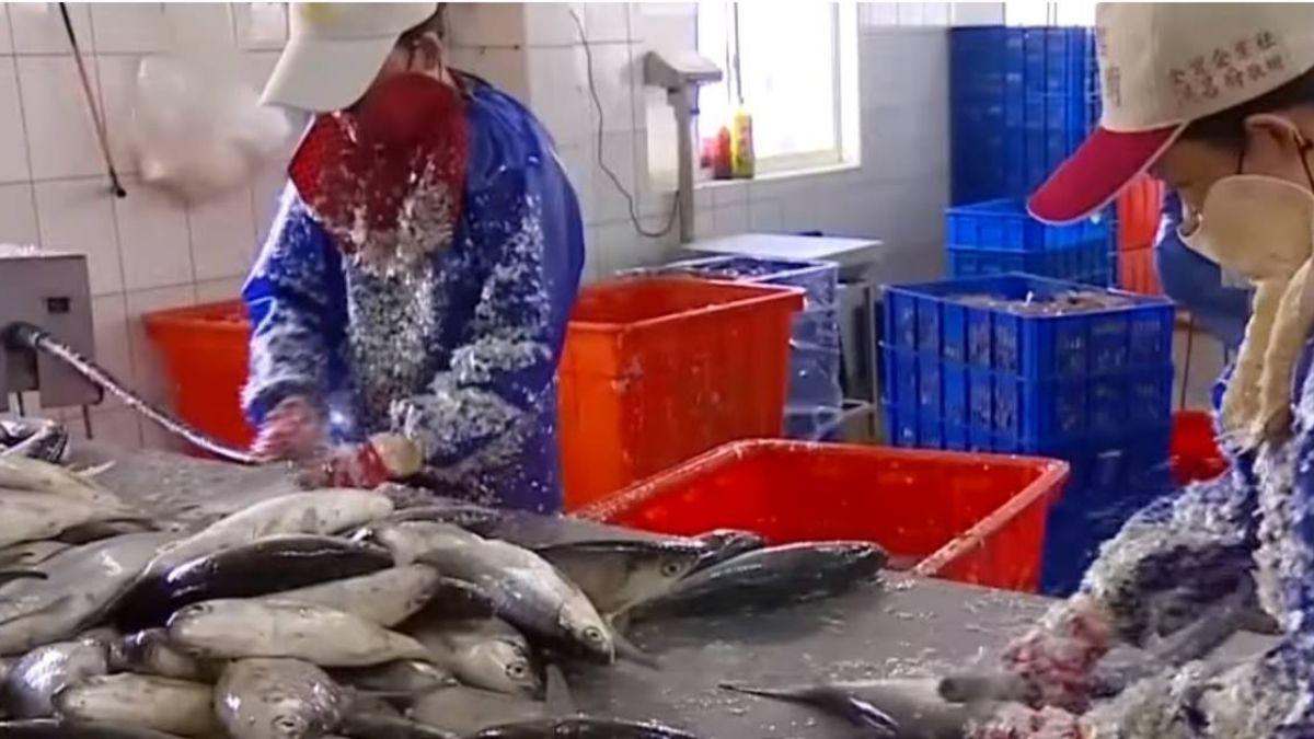 大陸市場掉了虱目魚契作歸零 養殖戶改攻泰國