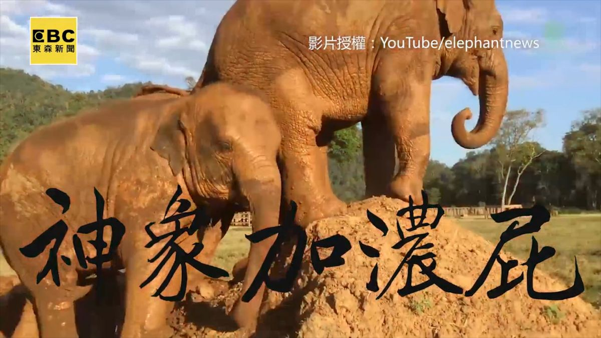請開聲音!狂大象強佔土丘 竟朝同伴放超濃郁絕招