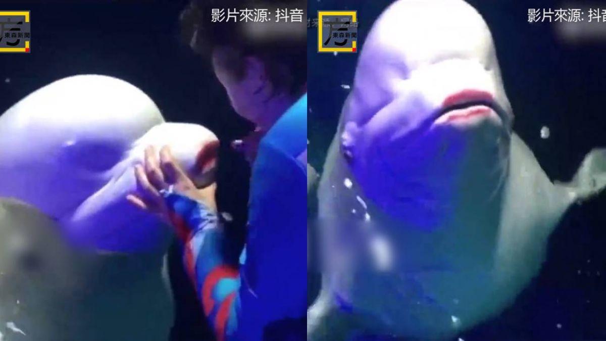 可惡!馴養師抓珍稀白鯨塗紅唇 動物當小丑引網友暴怒