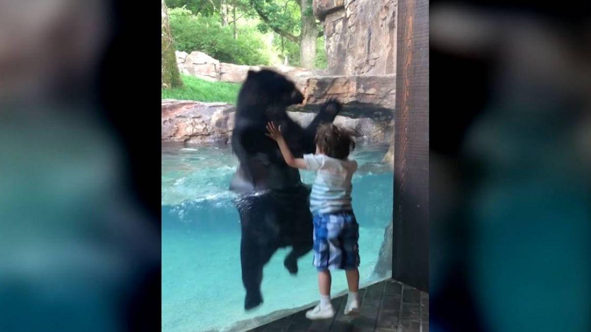 你跳我就跳!男童出招引注意 熊熊回應萌翻網友