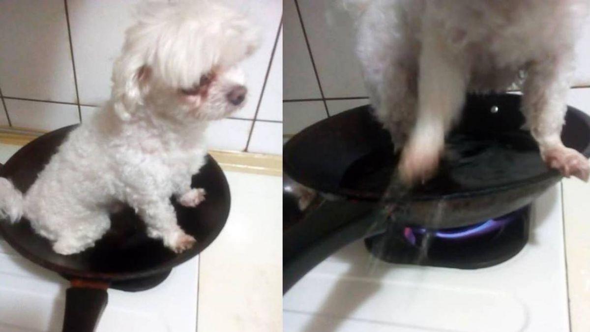 狗狗放平底鍋「水煮煎烤」! 網怒肉搜男子:抓出來打