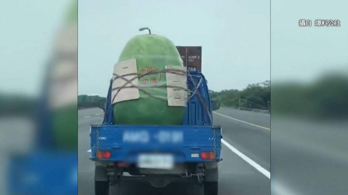 比人高大!國道驚見西瓜精 嚇壞駕駛:這是真的嗎?