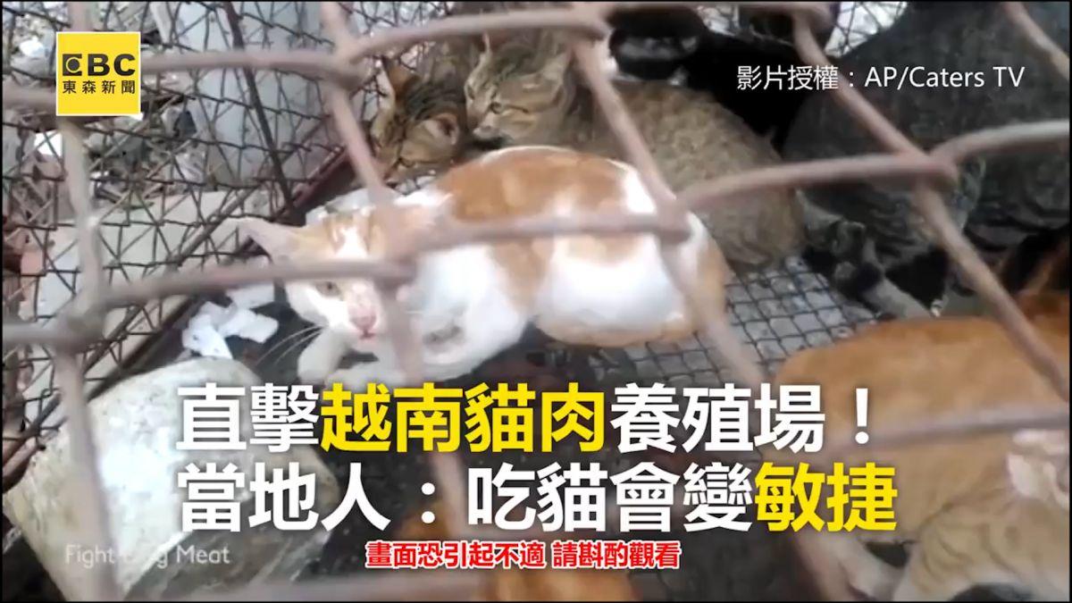 直擊越南貓肉養殖場!當地人:吃貓會變敏捷