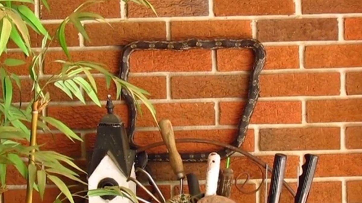 驚!蛇爬牆竟繞出正方形 網友驚呼:真實版貪食蛇