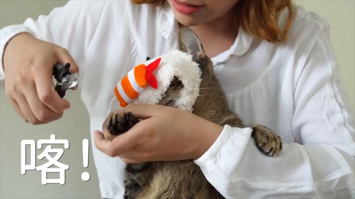 愛扭貓怎麼剪指甲?試試這幾招「頭套矇眼法」