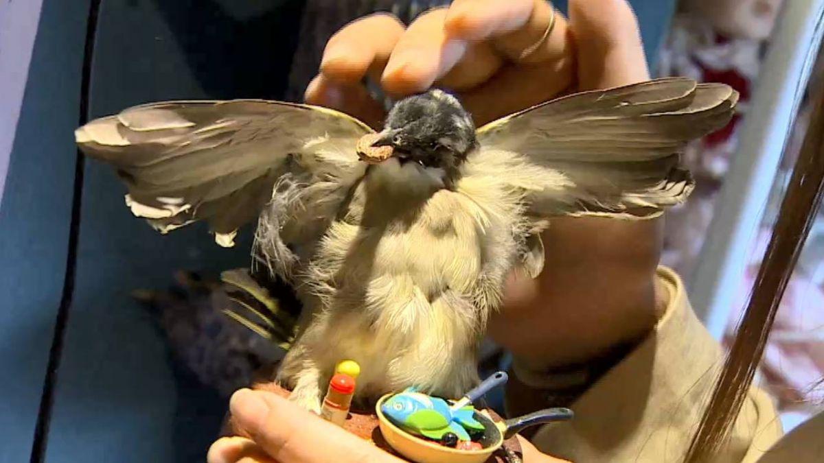 「斑鳩」製項鍊、耳環 驚悚引爭議
