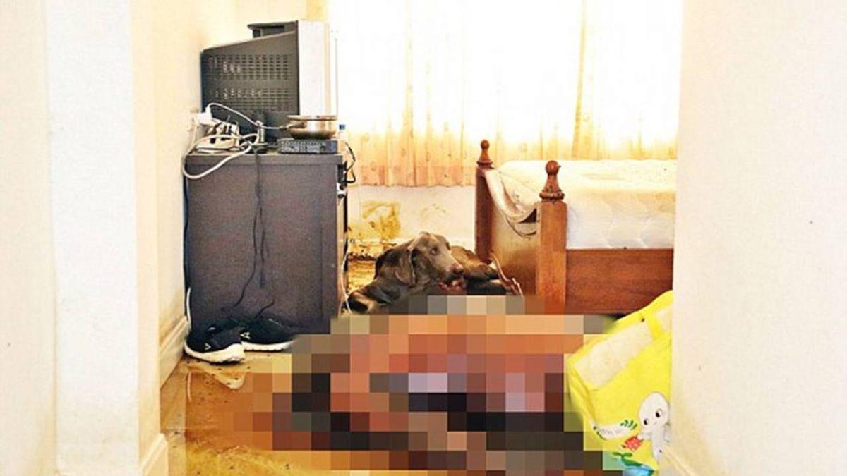 加拿大男房內裸死!忠犬伴屍十天 餓到將主人臉啃見骨